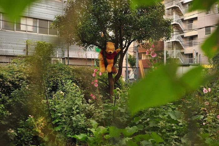 kamagasaki201110.jpg