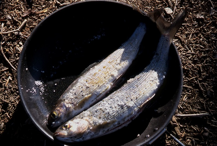 th_Trout for Dinner.jpg