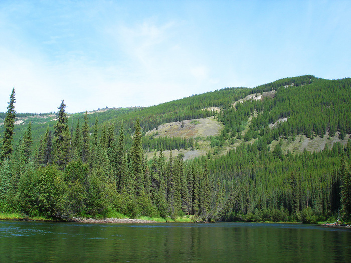 big salmon river with trees.JPG