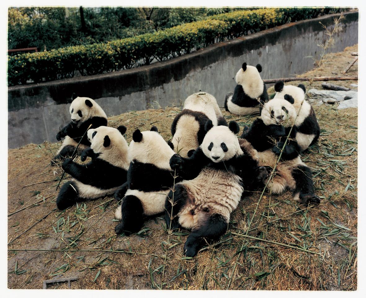 中国・臥龍パンダ保護センターの半野生で暮らすパンダの姿が満載。巻末にはパンダのマメ知識も。 『パンダちゃん』(2005年/185mm×225mm 100ページ/税込1680円)